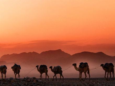photo d'une dune dans le désert